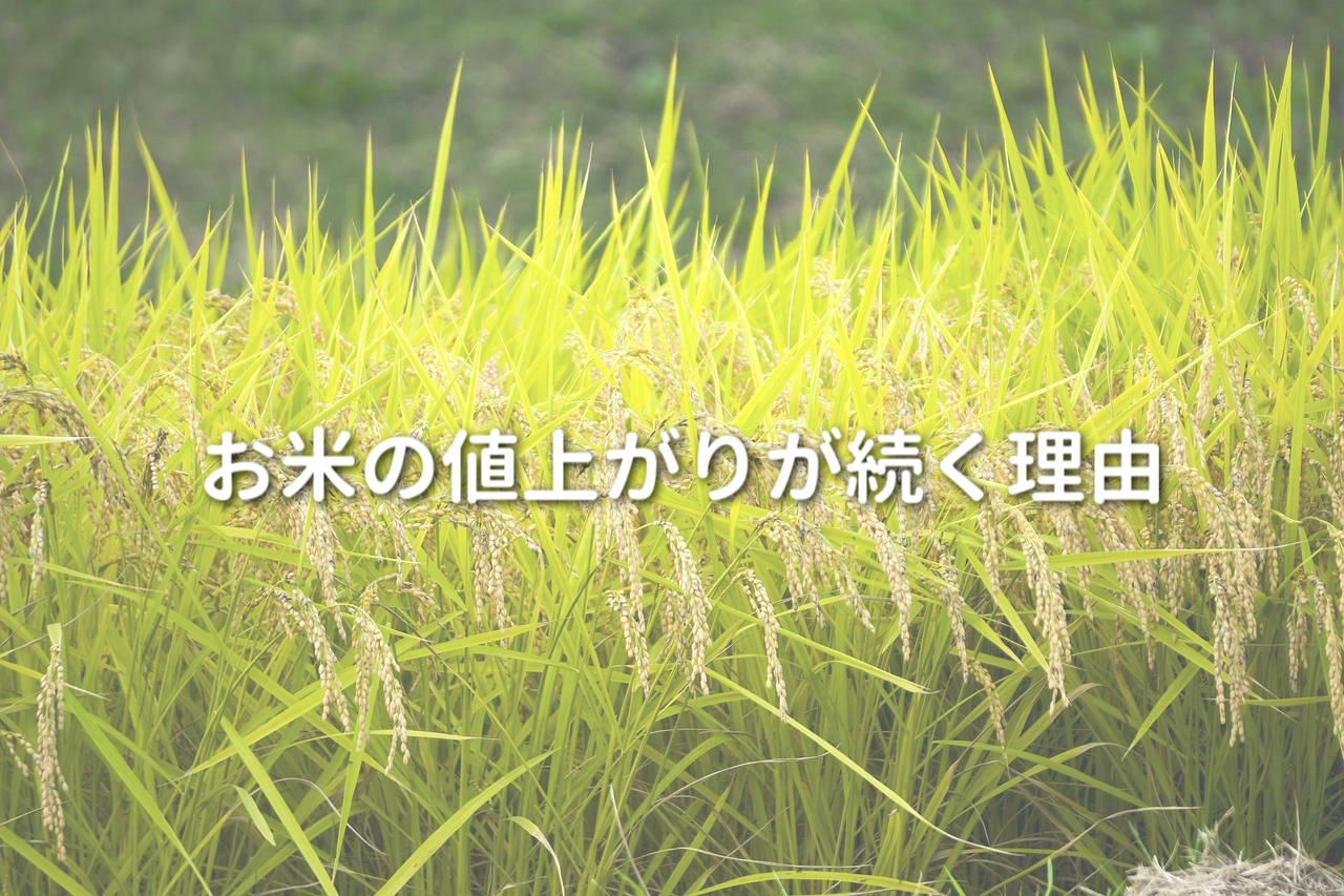 稲と田んぼ